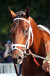 31 May 2010: Quality Road before the Metropolitan Mile Handicap at Belmont Park in Elmont NY.