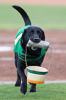 """""""Miss Babe Ruth"""" returns to the dugout after having delivered baseballs to the home plate umpire during the game between the Hagerstown Suns and the Greensboro Grasshoppers at NewBridge Bank Park on June 21, 2014 in Greensboro, North Carolina.  The Grasshoppers defeated the Suns 8-4. (Brian Westerholt/Four Seam Images)"""