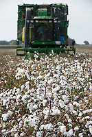 TURKEY, Asmali, near Adana, harvest of conventional cotton with John Deere 9970 basket cotton picker / TUERKEI, Asmali, bei Adana, konventioneller Baumwollanbau, nach Verspruehen eines Entlaubungsmittel wird die Baumwolle maschinell mit einer John Deere 9970 Korb-Pflueckmaschine geerntet