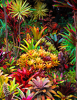"Bromeliad Sunset: Sunset alpine glow bathes the photographer's bromeliad garden after an afternoon shower, Big Island. Shot on 4x5"" transparency film, available only as a fine art print."