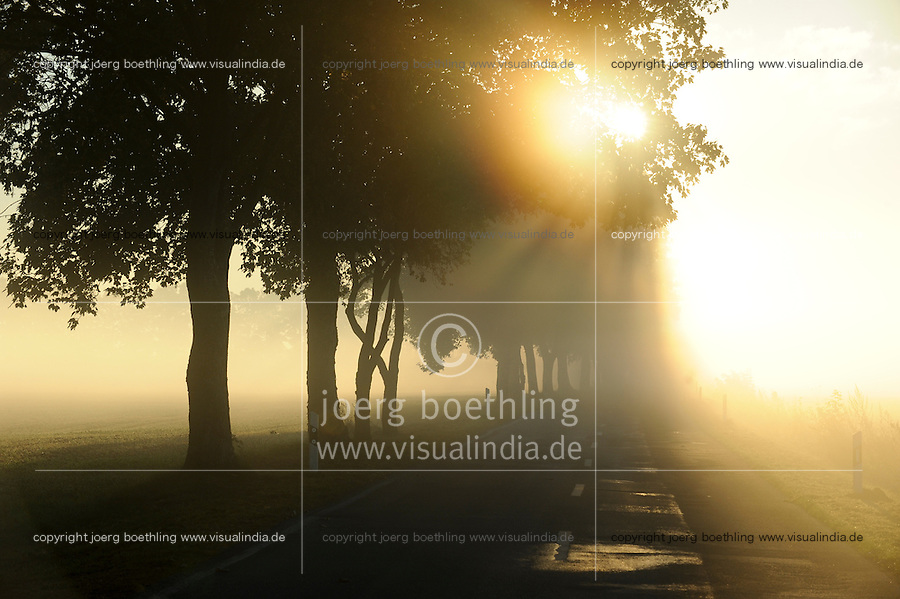 GERMANY countryside road during fog and sun rise in the morning / DEUTSCHLAND Plau, Strasse im Nebel und Sonnenaufgang am Morgen