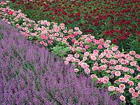 Flower beds at Oregon Garden, Silverton, Oregon