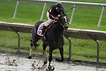 Bon Jovi Girl and jockey Jose Caraballo  jr. over a very wet and sloppy track. for The Susan's Girl at Delaware Park in New Stanton, Delaware 06.20.09