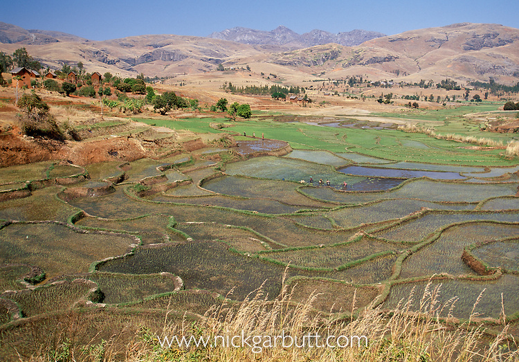 Deforested areas replaced by rice paddies and cultivation. Central highlands, Madagascar.