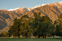 Farmland with native totara trees with sunset on winter mountains, Mount Adams of Southern Alps near Whataroa, Westland Tai Poutini National Park, West Coast, UNESCO World Heritage Area, New Zealand, NZ