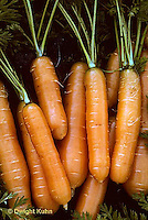 HS12-008a  Carrot - just picked, Clarion variety