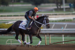 OCT 26 2014:Pants On Fire, trained by Kelly Breen, exercises in preparation for the Breeders' Cup Dirt Mile at Santa Anita Race Course in Arcadia, California on October 26, 2014. Kazushi Ishida/ESW/CSM
