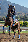 ARCADIA, CA  OCTOBER 25: Breeders' Cup Distaff entrant Paradise Woods, trained by John A. Shirreffs, exercises in preparation for the Breeders' Cup World Championships at Santa Anita Park in Arcadia, California on October 25, 2019.  (Photo by Casey Phillips/Eclipse Sportswire/CSM)