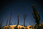 In the Cataviña Desert on Mexico's Baja Peninsula, stars punctuate the evening sky above a landscape dominated by cardon cacti and boojum trees. This beautiful yet seldom visited desert is one of my favorite areas, affording the blessings of striking imagery and solitude.