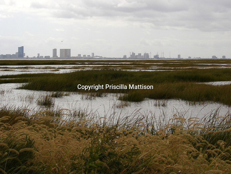Galloway Township, New Jersey - September 19, 2008:  The Atlantic City skyline is visible from the Edwin B. Forsythe National Wildlife Refuge.