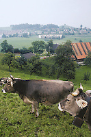 Switzerland. Zoug. Countryside. A few cows browse the fields near the town of Zoug. © 1989 Didier Ruef