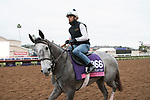 DEL MAR, CA - NOVEMBER 02: Significant Form, owned by Stephanie Seymour Brant and trained by Chad C. Brown, walks the track during morning workouts  Del Mar Thoroughbred Club on November 2, 2017 in Del Mar, California. (Photo by Michael McInally/Eclipse Sportswire/Breeders Cup)