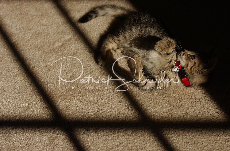 A young tabby kitten warms itself in the sun pouring in through a window. Image is model released.