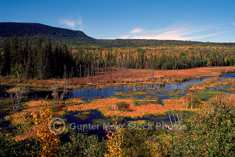 Marsh and Boreal Forest near Moberly Lake Provincial Park, near Chetwynd, Northern British Columbia, Canada, in Autumn