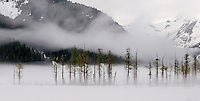 An eagle's nest appears out of the mist near Spencer Glacier.