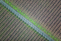 aerial photograph vineyard rows  Sonoma Valley Sonoma County, California