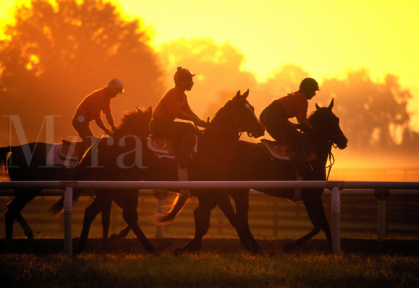 Exercise riders gallop young Thoroughbred race horses in training at dawn.