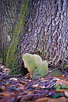 Leaf shaped rocks leaning against tree trunk