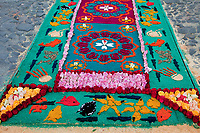 Antigua, Guatemala.  An alfombra (carpet) of flowers, pine needles, and other traditional materials decorates the street in advance of the passage of a procession during Holy Week, La Semana Santa.  The alfombra will be finished only a couple of hours before the passage of the procession, after which the remains will be quickly swept away by municipal street sweepers.