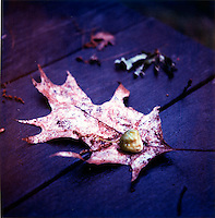Dry leaf on wet wooden table<br />