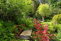 France, Manche (50), Saint-Germain-des-Vaux, Jardin en Hommage à Jacques Prévert, pont, ruisseau et azalée