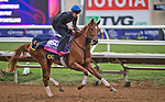 DEL MAR, CA - OCTOBER 31: Best Performance, owned by West Point Thoroughbreds, Inc., Tango Uniform Racing & Robert Masiello and trained by Christophe Clement, exercises in preparation for Breeders' Cup Juvenile Fillies Turf at Del Mar Thoroughbred Club on {mothname} 31, 2017 in Del Mar, California. (Photo by Scott Serio/Eclipse Sportswire/Breeders Cup)