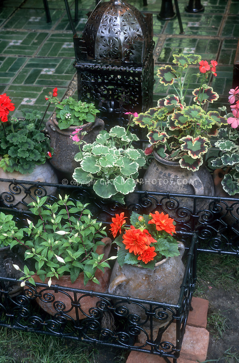 Sunny annual container garden: mixed rustic pots of  fancy-leaved annual geraniums Pelargoniums, fuchsia, dahlias, tile patio, old urn pots, ornament next to tile patio, wrought iron
