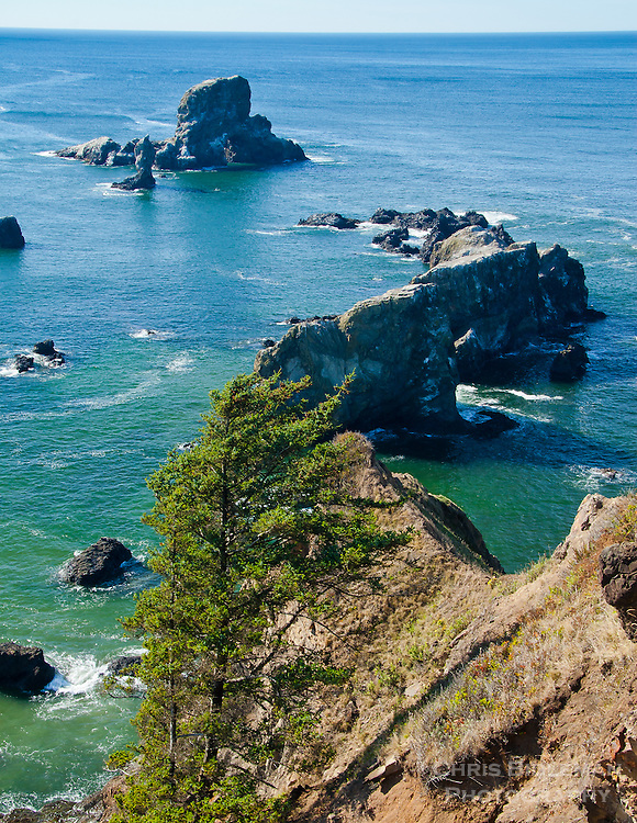 Gift card photo of Ecola point above the rocky cliffs in Cannon Beach, OR out on the Oregon Coast.  The ocean calm with rock outcroppings in the water with a lone tree in the foreground.