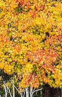 2016-12-10_FALL Colors