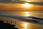 Santa Barbara's Beaches
