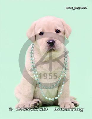 Xavier, ANIMALS, dogs, photos, SPCHdogs794,#A# Hunde, perros
