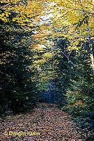 AU05-001z  Forest - leaf litter on path through forest