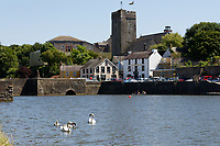 """Pictured: The killer swan, named by locals """"Mr Nasty"""" (R) with his family in the pond by Pembroke Castle, west Wales, UK. Sunday 08 July 2018<br /> Re: A vicious killer swan is prowling around Pembroke, determined to see off any threat to his territory by ruthlessly drowning his victims.<br /> So far, he has killed 10 other swans, though many more have been saved from his attacks.<br /> Dubbed by locals """"Mr Nasty""""  lives on the Castle Pond by Pembroke Castle. <br /> Bird sanctuary worker Maria Evans says she has watched him at work, drowning other swans, breaking their feet or pushing them over a sluice.<br /> In 2010, another killer swan dubbed """"Hannibal"""" had his wings clipped after attacking other swans in the same pond."""