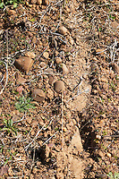 albarin sandy gravelly soil Bodegas Margon , DO Tierra de Leon , Pajares de los Oteros spain castile and leon