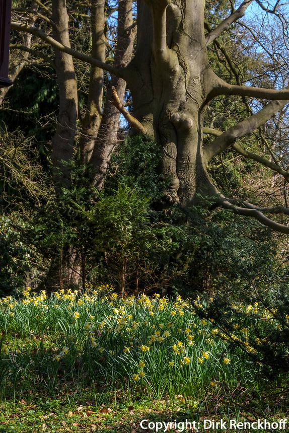 Arboretum im Park Marienhof bei Burg Henneberg, Hamburg-Poppenbüttel, Deutschland, Europa<br /> Arboretum in park Marienhof at Burg Henneberg in Hamburg-Poppenbüttel, Germany, Europe