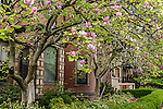 Spring blossoms in the Back Bay neighborhood, Boston, Massachusetts, USA