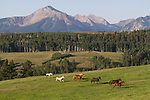 Horse running in the Colorado, Rocky Mountains, USA .  John leads private photo tours in Telluride and the San Juan Mountains. Year-round Colorado photo tours.
