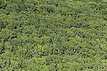 Aerial - forests of the Northern Division.