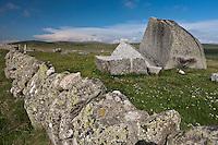 Europe/France/Languedoc-Roussillon/48/Lozère/Aubrac/Env de Marchastel: Paturages en Aubrac et blocs de granite érodés par les glaciers