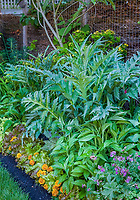 small space backyard garden mixed border with artichoke, edible plants and flowers