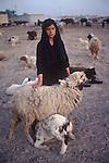Marsh Arabs. Southern Iraq.  Marsh Arab teenage girl tending flock of sheep and goats. Family farm in background. 1984