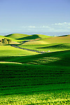 The Palouse Hills running north along SR27 between the towns of Pullman and Palouse.  Pullman is the home of Washington State Universitiy.