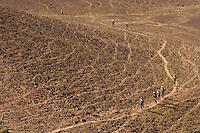 The Marathon des Sables is a 6-day endurance race of 243 km equivalant to 5 1/2 marathons. It plays out in the Sahara Desert, southern Morocco, up and down sand dunes, along dried lakes and riverbeds, past ruins, always under the baking sun. Competitors at the Marathon des Sables expierence mid-day temperatures of up to 120°F. They are running or walking on even rocky, stony ground as well as 15-20% of the distance being in sand dunes. In addition to that, competitors have to carry everything they will need for the duration of the race on their backs in a rucksack. Water is rationed and handed out at each checkpoint. It is the hardest footrace on earth...Der Marathon des Sables in der marrokanischen Sahara gilt als der wohl härteste und bekannteste Wüstelauf der Welt. Ein Ultralauf über 243 Kilometer, der in 6 Etappen zwischen 27 und 82 Kilometer in 7 Tagen gelaufen wird. Die längste Etappe geht bis spät in die Nacht hinein. Die Läufer tragen ihre Ausrüstung und Verpflegung für das ganze Rennen im Rucksack. Lediglich Wasser (9 Liter pro Tag) gibt es an den Checkpoints. Die Teilnehmer laufen über Sanddünen, steiniges Gelände und steile Berganstiege. Die Hitze kann bis zu 50 Grad Celsius betragen. ,Samir Akhdar , Aziz El Akad ,Salahmeh al Aqra, Jordanien, ,Mustapha Ait Amar, MAR