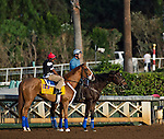 October 26, 2014:   V E Day, trained by Jimmy Jerkens, exercises in preparation for the Breeders' Cup Classic at Santa Anita Race Course in Arcadia, California on October 26, 2014. Scott Serio/ESW/CSM