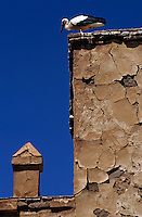 Stork perched on an old wall with cracked paint, Telouet, Morocco.