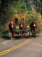 Mule team pulling loaded cart on country road. Strasburg Pennsylvania USA Lancaster County.