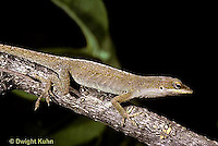 1R06-028a   Green Anole - camouflaged - Anolis carolinensis