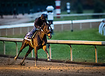 Dayoutoftheoffice, trained by trainer Timothy E. Hamm, exercises in preparation for the Breeders' Cup Juvenile Fillies at Keeneland 10.30.20