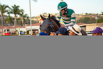 DEL MAR,CA-AUG 17: Higher Power,ridden by Flavien Prat, after winning the Pacific Classic at Del Mar Race Track on August 17,2019 in Del Mar,California. Kaz Ishida/Eclipse Sportswire/CSM