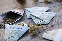 Samentütchen basteln, Anleitung zum Basteln, Knicken, Falten von Samentütchen, Umschlag, Umschläge, aus Geschenkpapier, Bastelei, Wildsamen in selbstgebastelten Tütchen zum Verschenken, Wildkräutersamen, Wildkräuter-Samen, Samen von Wildkräutern, Samen von Wildpflanzen im Herbst sammeln, seed       Wildkräutersamen, Wildkräuter-Samen, Samen von Wildkräutern, Samen von Wildpflanzen im Herbst sammeln, seed, Mohn-Samen, Mohnsamen, Samen von Mohn, Mohnsaat, Saat, Papaver, Engelwurz-Samen, Samen von Engelwurz, Samen, Samenstände, Saat, Gewöhnliche Wald-Engelwurz, Waldengelwurz, Engelwurz, Angelica sylvestris, Wild Angelica, L'angélique des bois, L'angélique sauvage, L'angélique sylvestre, herbe à la fièvre, Malven-Samen, Samen von Malve, Malva, Wilde Möhre, Daucus carota, Wild Carrot, Carrot, bird's nest, bishop's lace, Queen Anne's lace, La carotte sauvage